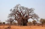 blog image baobab 2